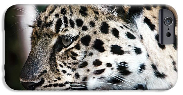 Wildlife Photographer iPhone Cases - Leopard iPhone Case by John Rizzuto