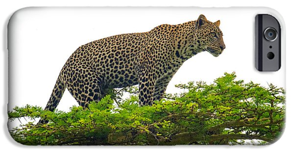 Wild Animals iPhone Cases - Leopard Panthera Pardus Climbing iPhone Case by Panoramic Images