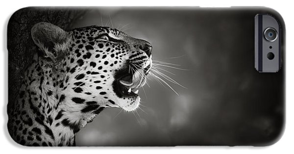 Mouth iPhone Cases - Leopard portrait iPhone Case by Johan Swanepoel