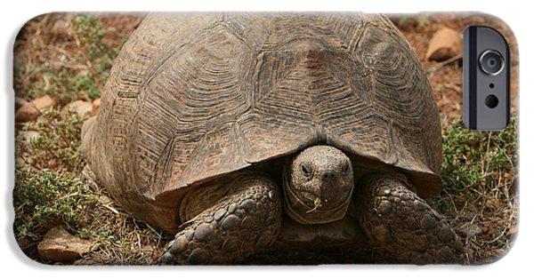 Addo iPhone Cases - Leopard Tortoise II iPhone Case by Bruce J Robinson