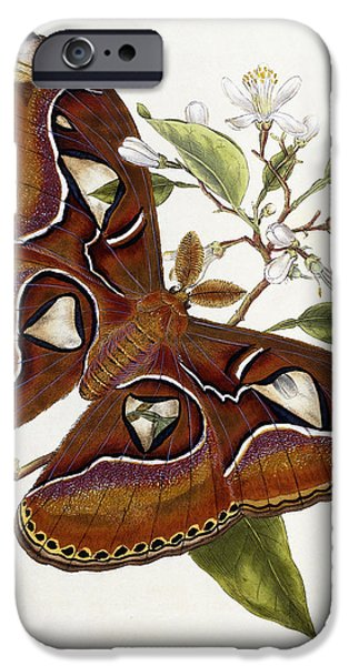 Flora Drawings iPhone Cases - Lepidoptera iPhone Case by Edward Donovan