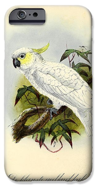 Cockatoo iPhone Cases - Lesser Cockatoo iPhone Case by J G Keulemans
