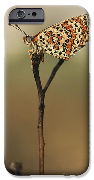 Lesser Spotted Fritillary iPhone Case by Alon Meir