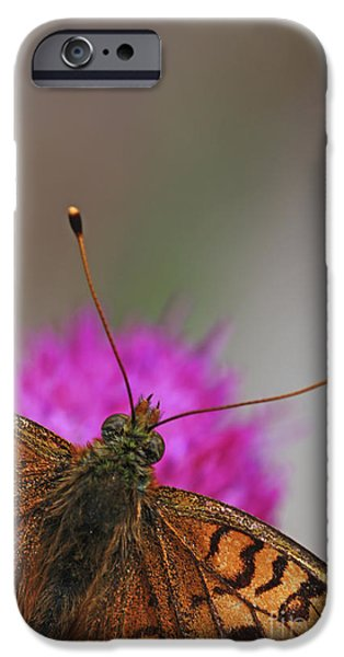 Lesser Spotted Fritillary iPhone Case by Amos Dor