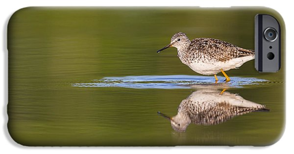 Beach Landscape iPhone Cases - Lesser Yellowlegs and its Reflection iPhone Case by Tim Grams