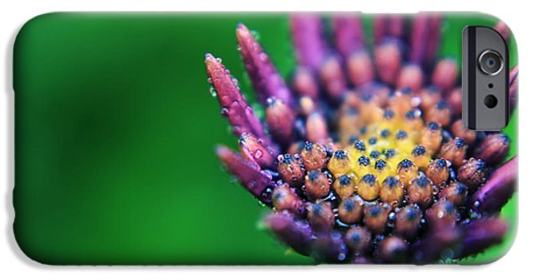 Macro Flower iPhone Cases - Let Love Grow iPhone Case by Laurie Search