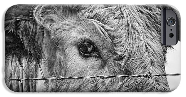 Coos iPhone Cases - Let me go free iPhone Case by John Farnan