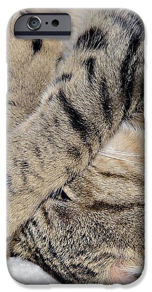 Let Me Sleep iPhone Case by Susan Leggett