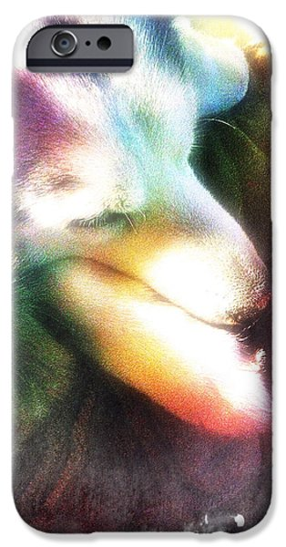 Dogs iPhone Cases - Let Sleeping Dogs Lie iPhone Case by May Finch