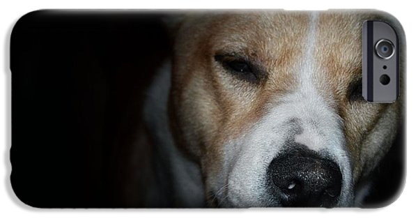 Dogs Pyrography iPhone Cases - Let sleeping dogs lie. iPhone Case by Tim Kravel