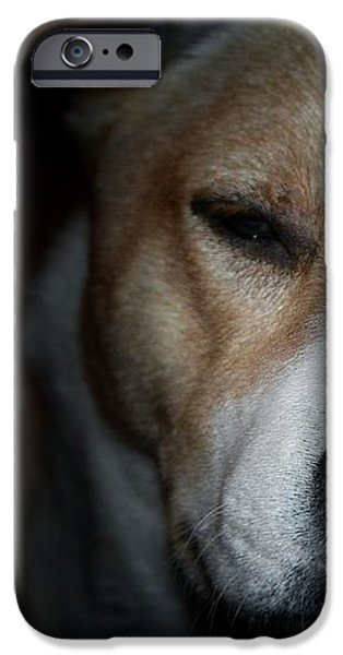 Let sleeping dogs lie. iPhone Case by Tim Kravel