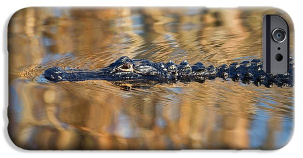 Alligator iPhone Cases - Lethal Glide iPhone Case by Mike  Dawson