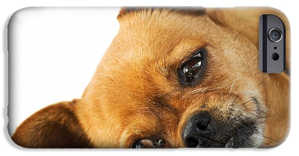 Skewed iPhone Cases - Lethargy of Doggy  iPhone Case by Sinisa Botas