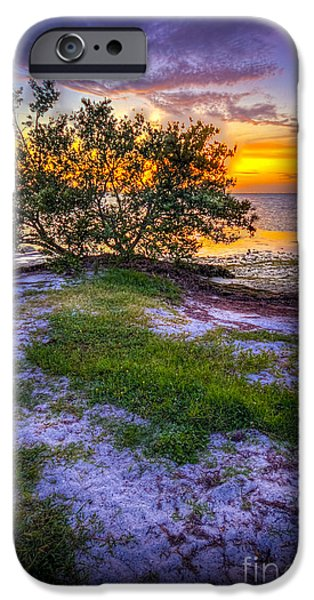 Trees At Sunset iPhone Cases - Lets Keep Looking iPhone Case by Marvin Spates