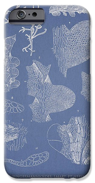 Algae iPhone Cases - Leveillea jungermannioides iPhone Case by Aged Pixel