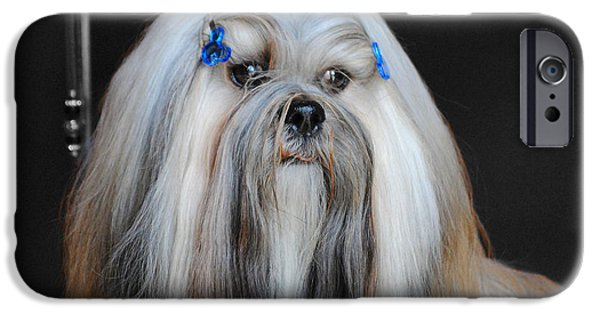 Dog And Toy iPhone Cases - Lhasa Apso iPhone Case by Jai Johnson