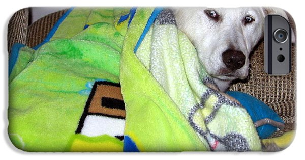 Mixed Labrador Retriever iPhone Cases - Liberty the Dog with Her SpongeBob Blanket iPhone Case by Amy Hosp