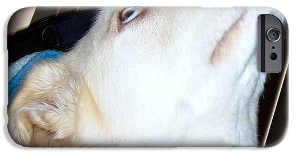 Mixed Labrador Retriever iPhone Cases - Liberty Thinking about It iPhone Case by Amy Hosp