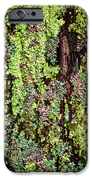 Lichens iPhone Cases - Lichen iPhone Case by Elena Elisseeva