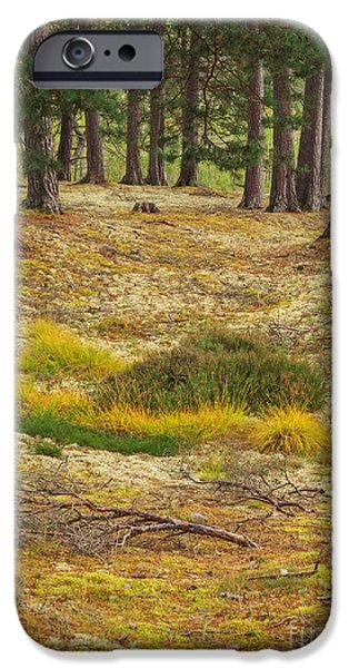 Lichens iPhone Cases - Lichens and Grasses on the Forest Floor iPhone Case by Louise Heusinkveld
