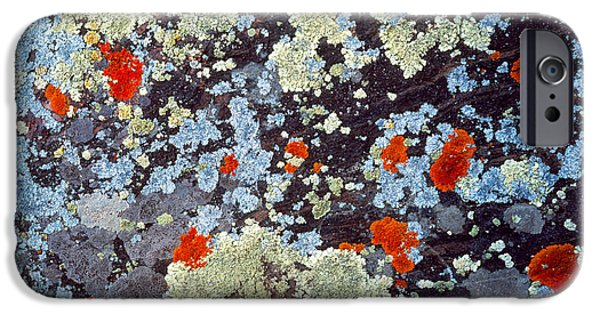 Abstractions iPhone Cases - Lichens On Rock Co Usa iPhone Case by Panoramic Images