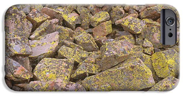 Lichen iPhone Cases - Lichens On Rocks At Yankee Boy Basin iPhone Case by Panoramic Images