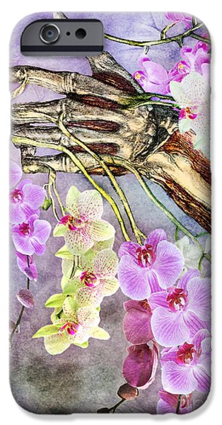 Nature Study iPhone Cases - Life and Death iPhone Case by Michael  Volpicelli