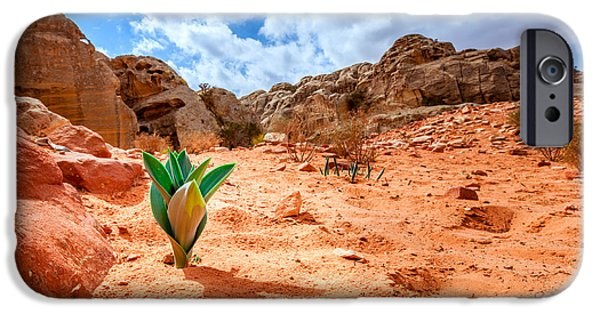 Jordan iPhone Cases - Life in the desert iPhone Case by Alexey Stiop