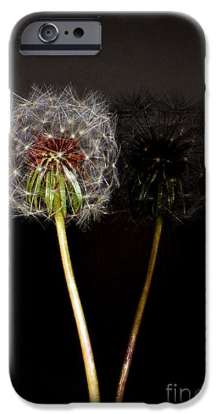 Surtex Licensing iPhone Cases - Life is just dandy Dandelion Reflections iPhone Case by adSpice Studios