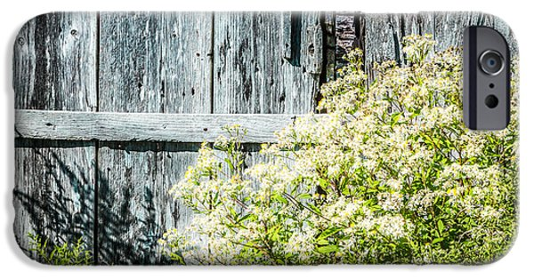 Mid-coast Maine iPhone Cases - Life Will Out iPhone Case by Susan Cole Kelly Impressions