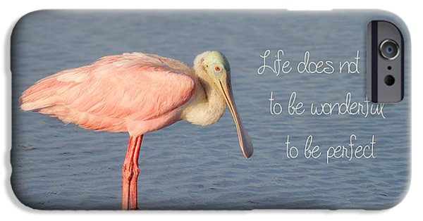 Spoonbill iPhone Cases - Life Wonderful and Perfect iPhone Case by Kim Hojnacki