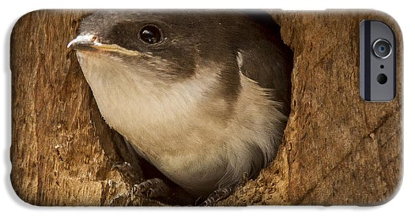 Baby Bird iPhone Cases - Lift off iPhone Case by Jean Noren