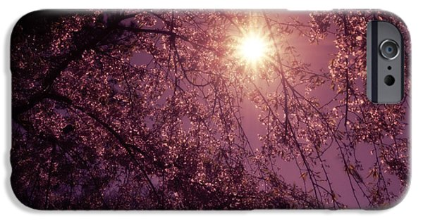 Cherry Blossoms iPhone Cases - Light and Cherry Blossoms iPhone Case by Vivienne Gucwa
