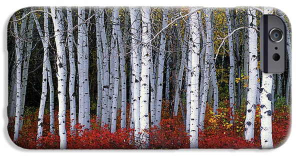 Autumn Trees iPhone Cases - Light in Forest iPhone Case by Leland D Howard