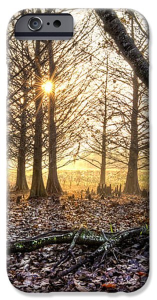 Light in the Trees iPhone Case by Debra and Dave Vanderlaan