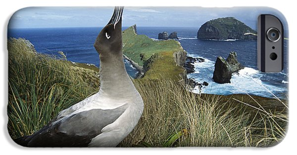 Wildlife Celebration iPhone Cases - Light-mantled Albatross Sky-pointing iPhone Case by Tui De Roy