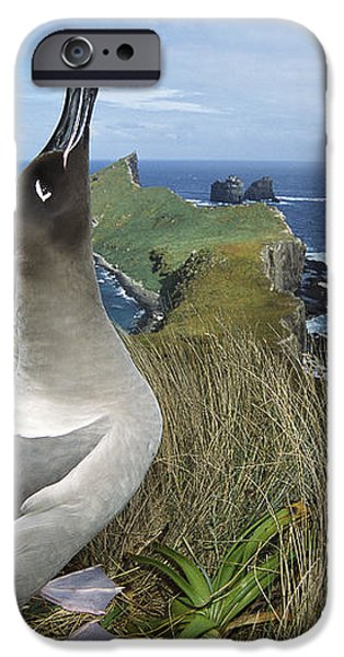 Light-mantled Albatross Sky-pointing iPhone Case by Tui De Roy