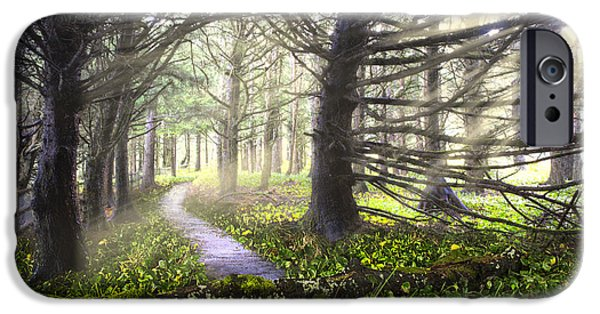 Fall Scenes iPhone Cases - Light on the Trail iPhone Case by Debra and Dave Vanderlaan