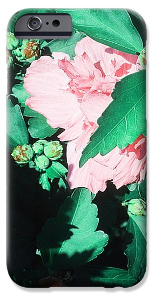 Guy Ricketts Photography iPhone Cases - Like A Love To Come iPhone Case by Guy Ricketts