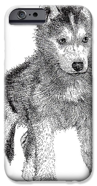 Husky Drawings iPhone Cases - Lil Husky iPhone Case by Terri Pfister
