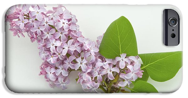 Lilac Flower iPhone Cases - Lilac Flowers - White Background iPhone Case by Keith Webber Jr