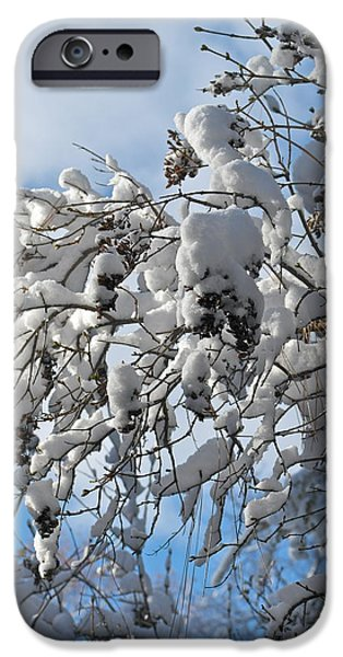 Nature Study iPhone Cases - Lilac in Winter iPhone Case by Michele Myers