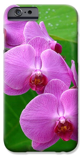 Lilac Orchid Beauties iPhone Case by Sue Melvin