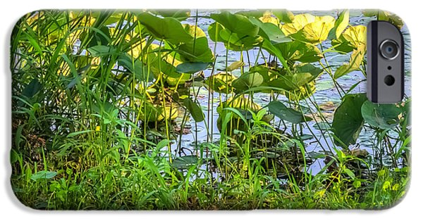 Nature Center Pond iPhone Cases - Lilies On The Lake iPhone Case by Rob Sellers