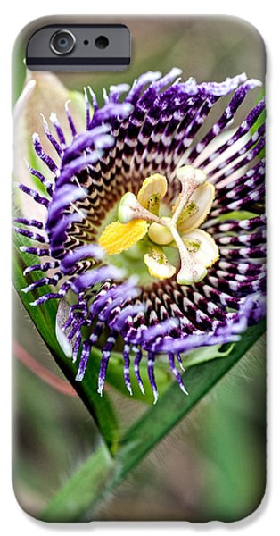 Passionflower iPhone Cases - Lilikoi Flower iPhone Case by Dan McManus