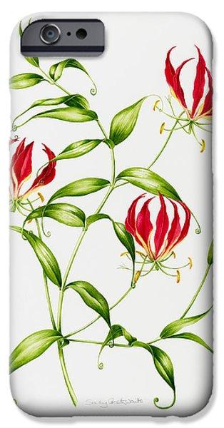 Lilium iPhone Cases - Lilium rothschildiana iPhone Case by Sally Crosthwaite