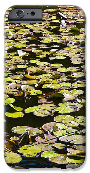 Lilly pads iPhone Case by David Pyatt