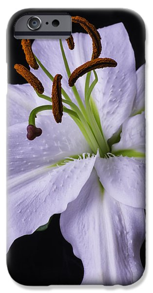 White Tiger iPhone Cases - Lily Beauty iPhone Case by Garry Gay