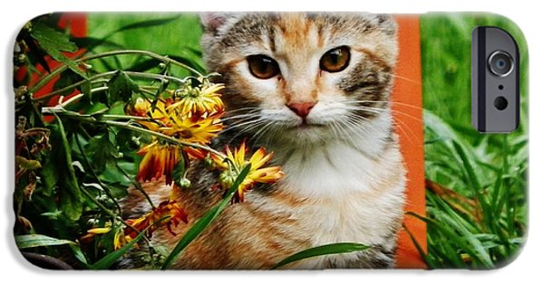 American Shorthair iPhone Cases - LILY Garden Cat iPhone Case by VLee Watson