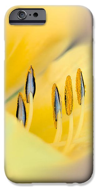 Lilium iPhone Cases - Lily Impressions iPhone Case by Bob Orsillo